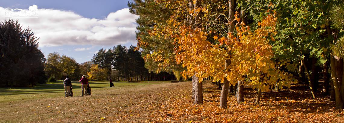 Autumn 1140 x 408 - 2