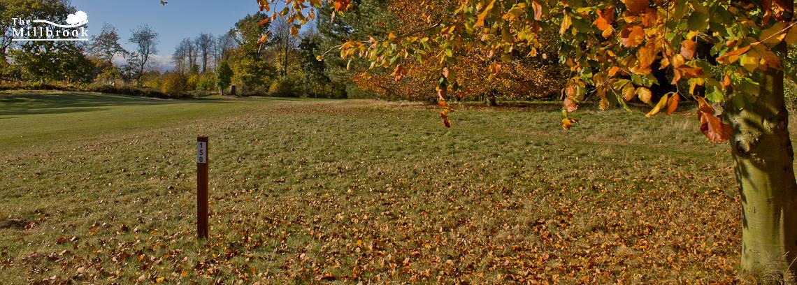 Autumn 1140 x 408 - 6