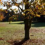 Autumn 1140 x 408 - 7