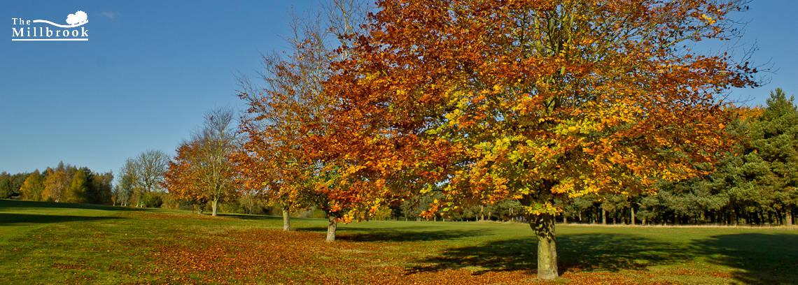 Autumn 1140 x 408 - 8