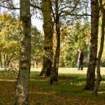 Autumn 1140 x 408 - 5