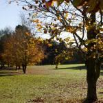 Autumn 1140 x 600 - 7