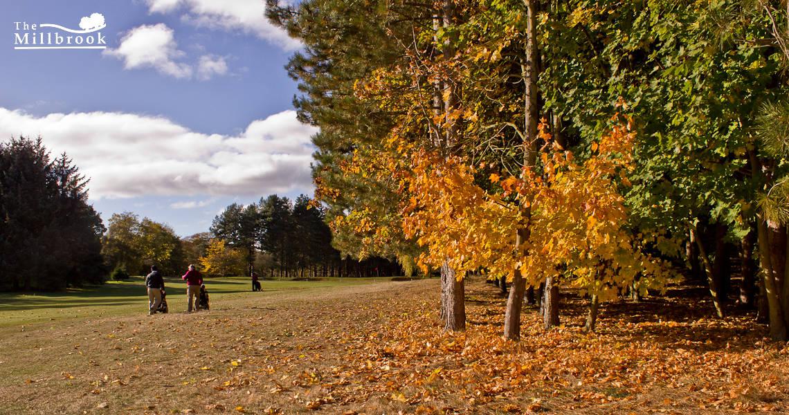 Autumn 1140 x 600 - 2
