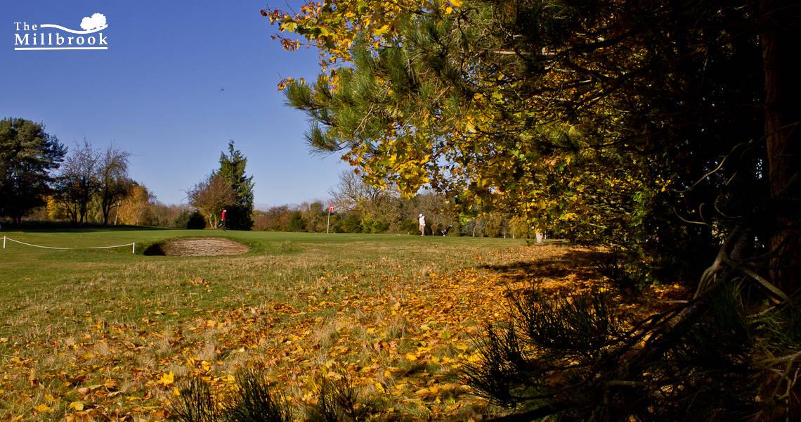 Autumn 1140 x 600 - 13
