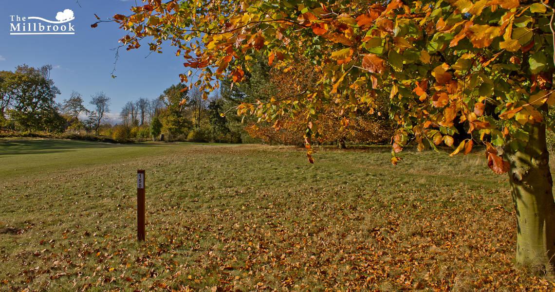 Autumn 1140 x 600 - 6