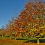 Autumn 1140 x 600 - 8