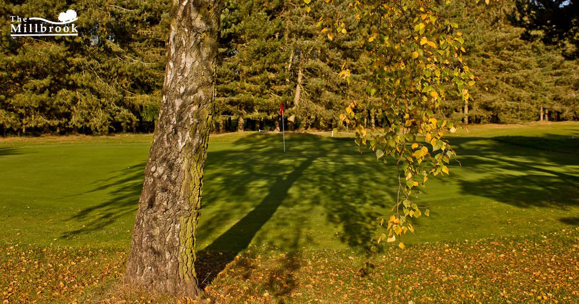 Autumn 1140 x 600 - 9