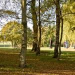 Autumn 1140 x 600 - 5