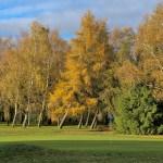 Autumn 1140 x 408 - 15
